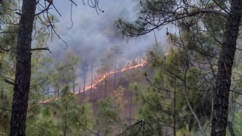 [5] Everything To Know About Uttrakhand Wildfire
