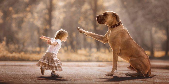 Benefits Of Having Dogs